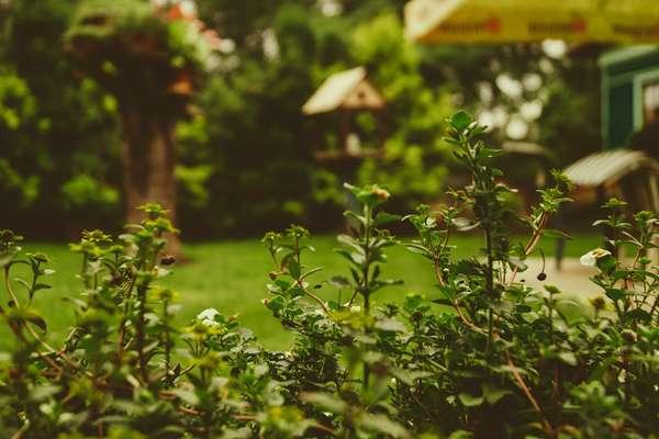 Porządki w ogrodzie Kalisz Pomorski